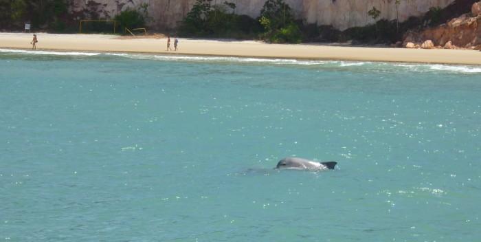 Baia dos Golfinhos. Foto Site Mochileiros