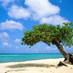 Vídeo: Conheça as belezas de Aruba no Caribe