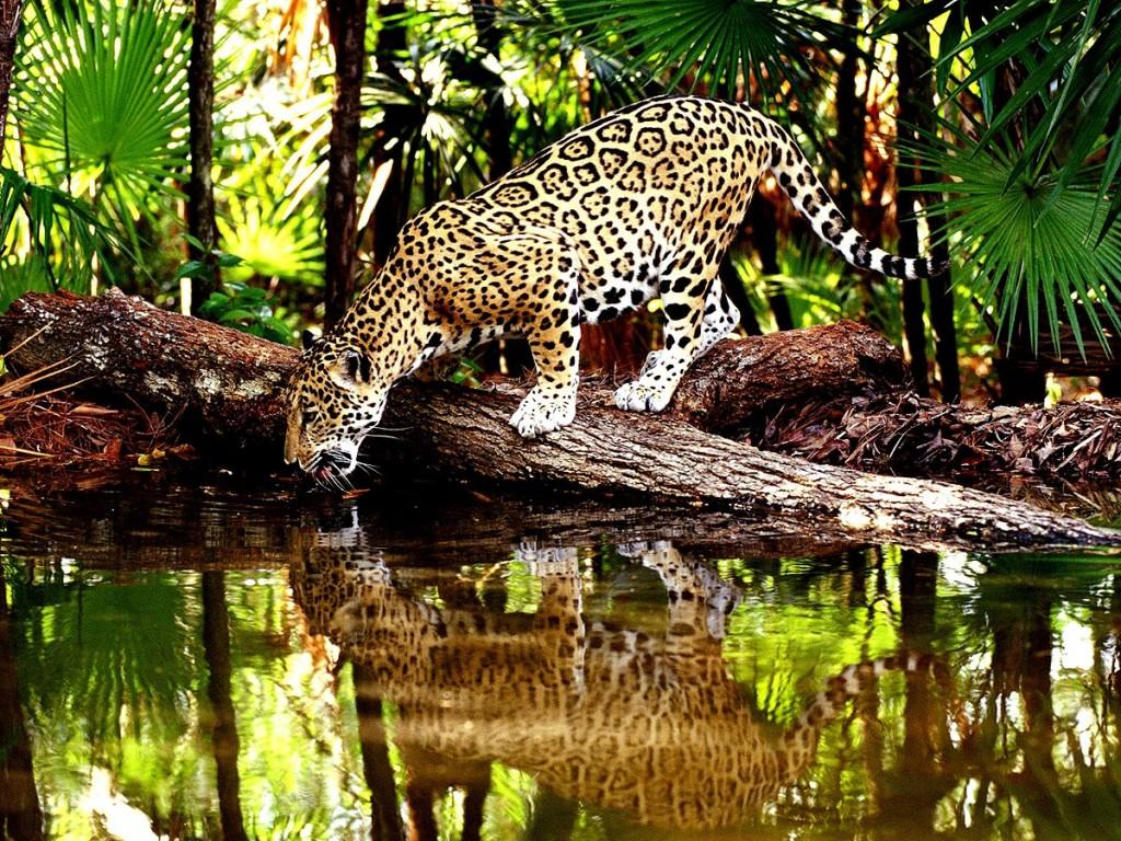Amazônia. Foto: Site Brasil Albania RJ